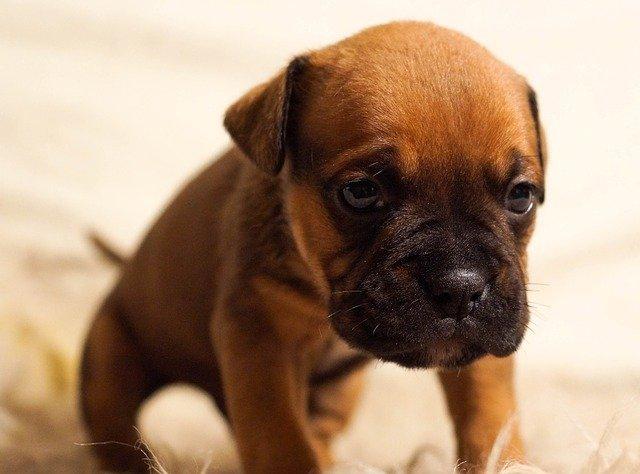 smutné štěně