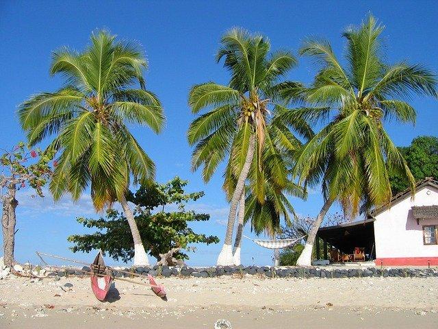 palmy u domku