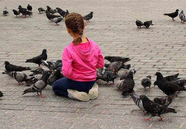 malá holčička krmí holuby